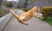 ジャンプ猫 体が重い